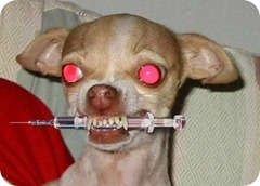 evil fucking dog